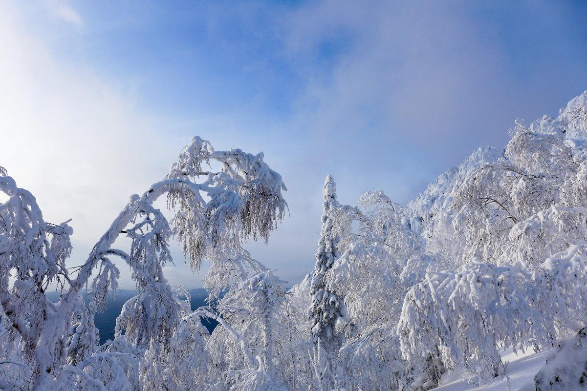 Графика зимы - Светлана Игнатьева