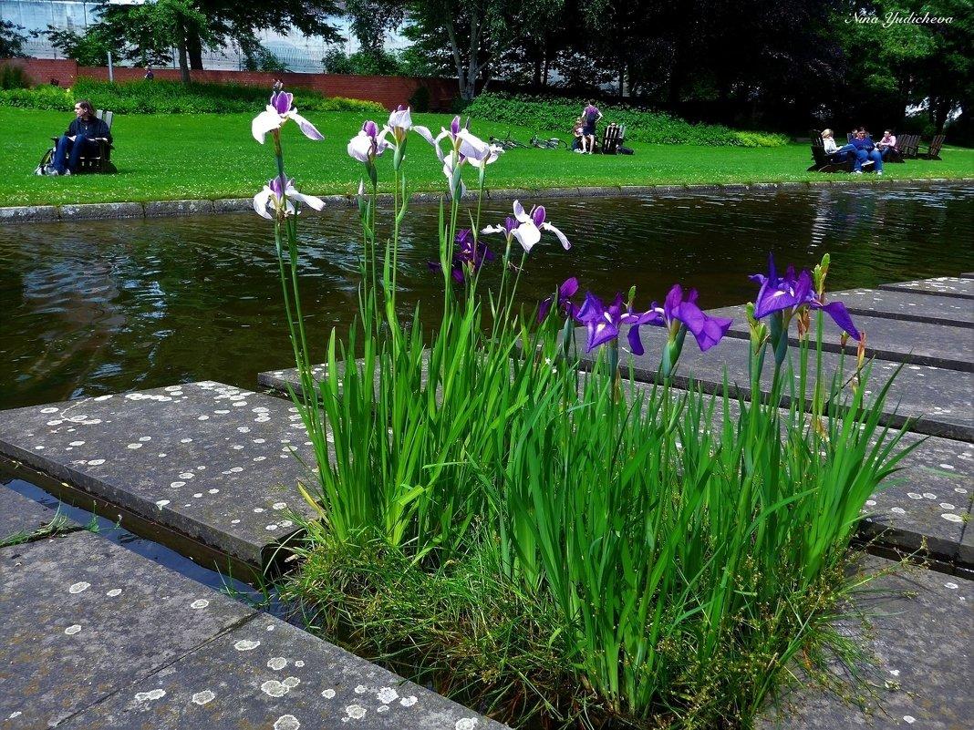 Парк цветов в Гамбурге (серия). Отдыхающие у воды - Nina Yudicheva