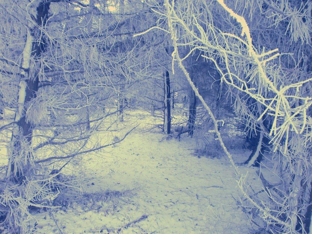 Зимняя сказка - mAri