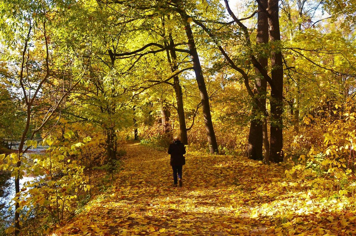 Аллея в Золотую осень... - Sergey Gordoff