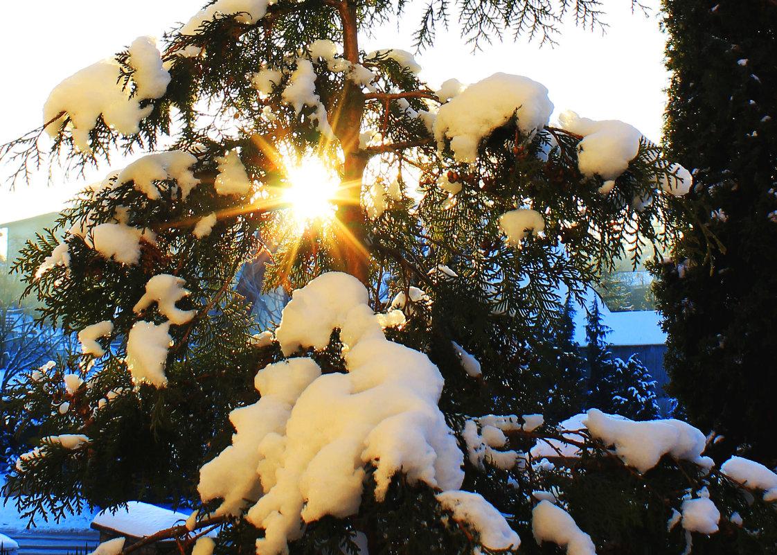 Зима, мороз... - Николай Щеглов