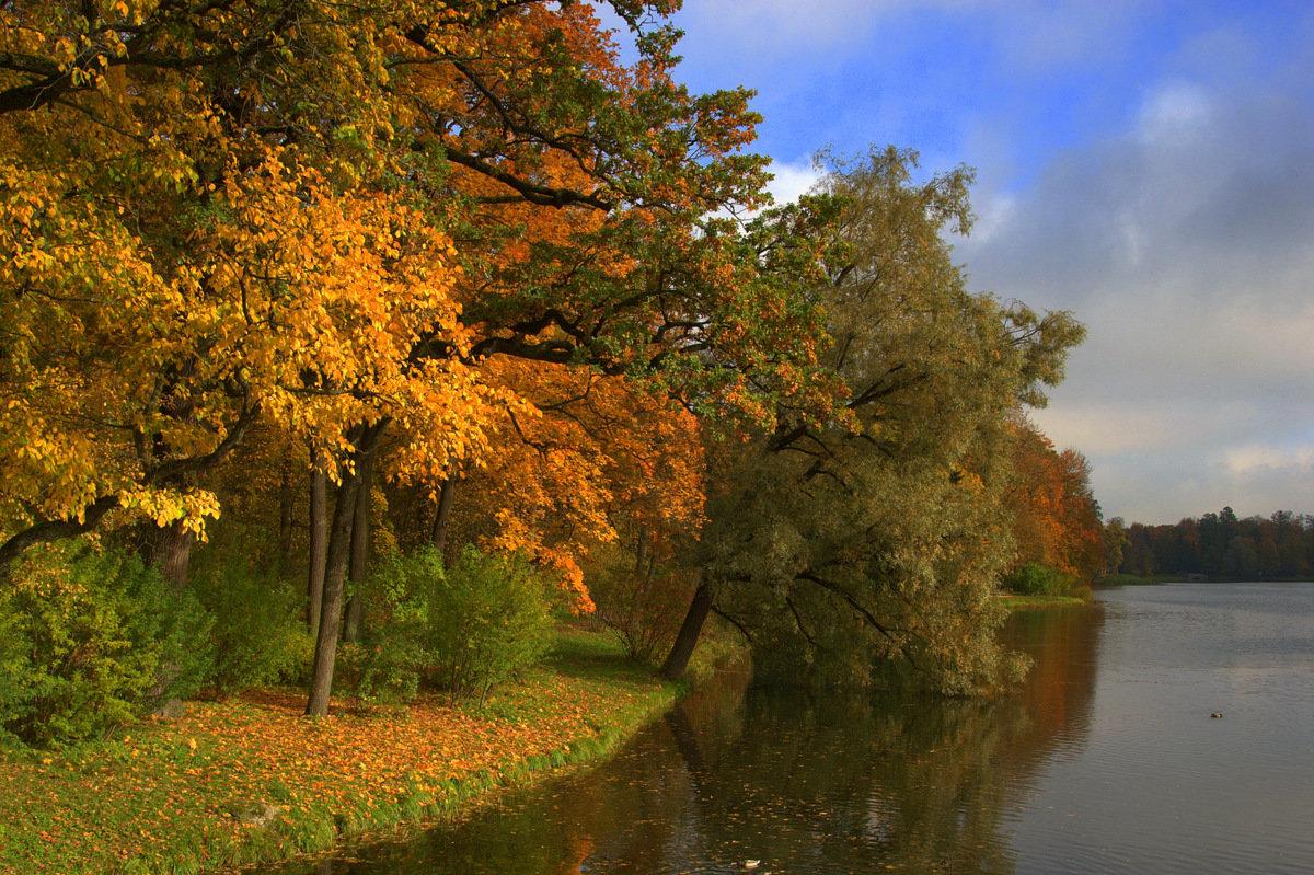 Осенний берег - Наталья