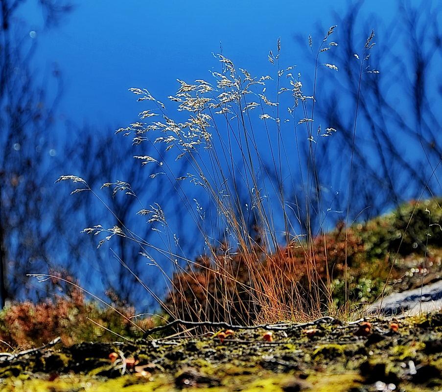 Осень - вадим измайлов