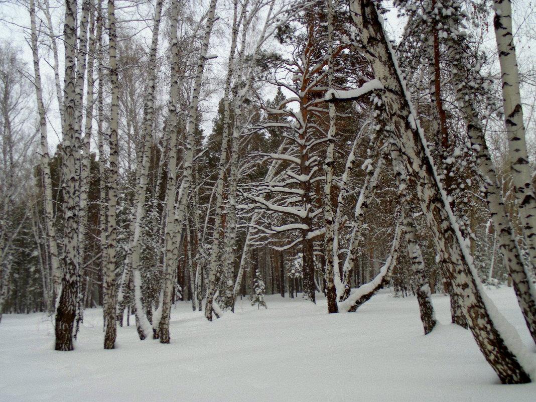 В лесу. - Мила Бовкун