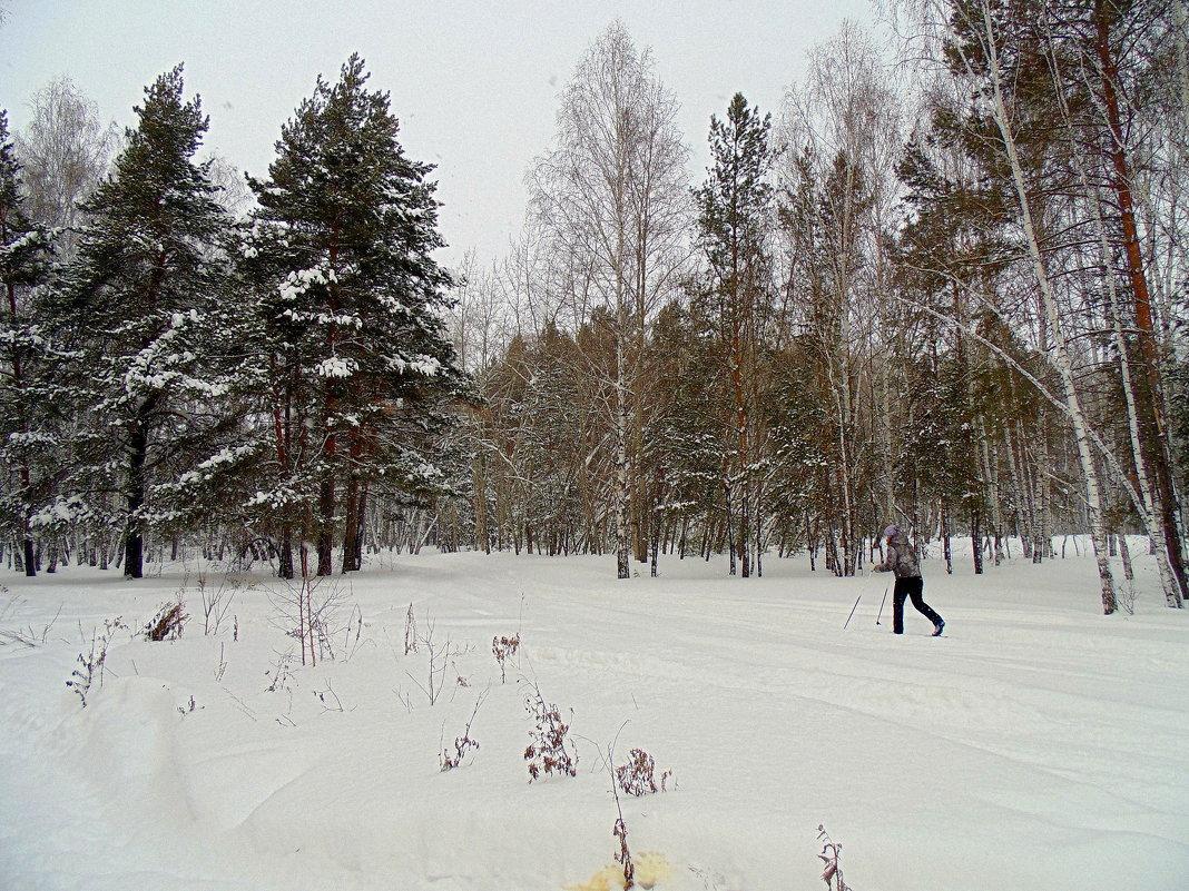 Смешанный лес . Зима. - Мила Бовкун