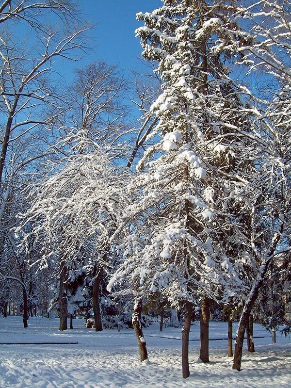 Зимняя - Сергей Тарабара