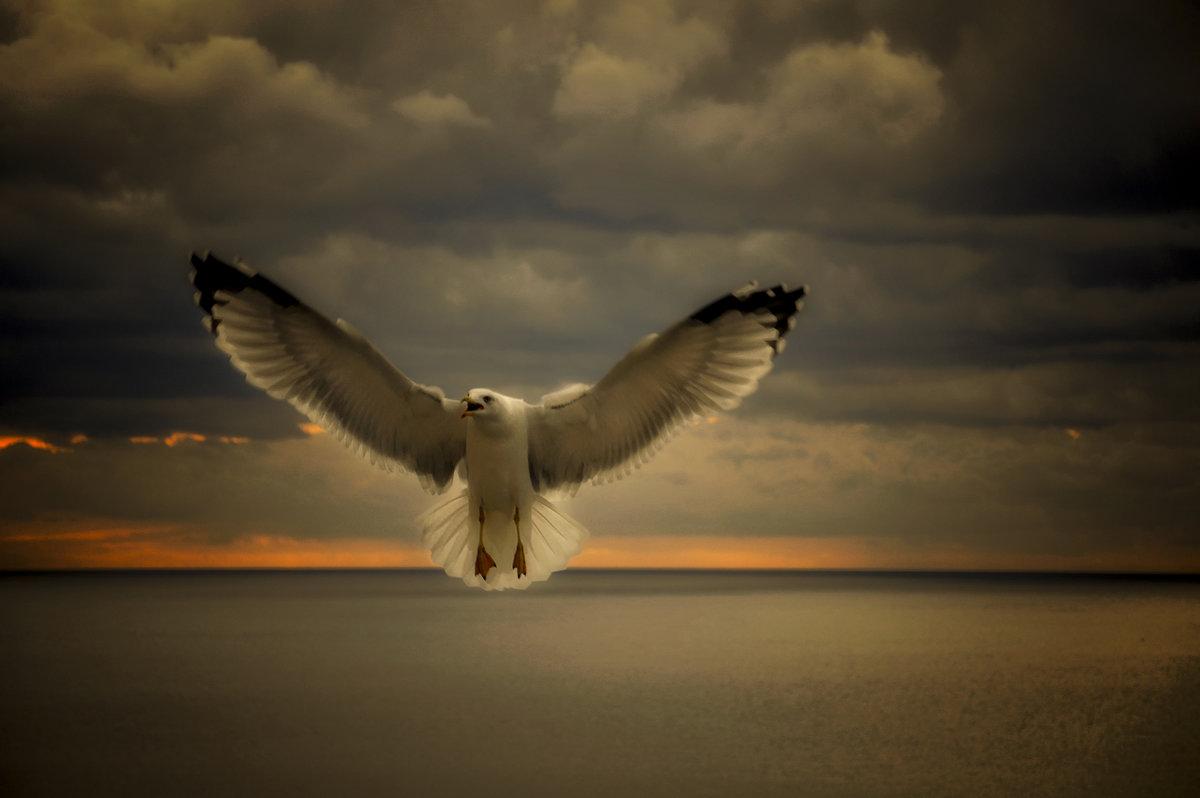 """Из серии """"Никогда не учите птиц летать..."""" - Александр Бойко"""