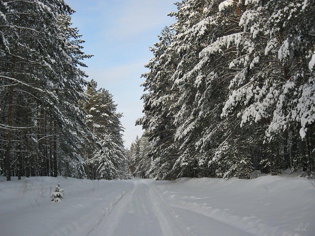 Зимняя дорога - Лена L.