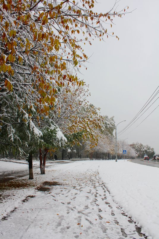 Такого снегопада.. - Наталья Золотых-Сибирская