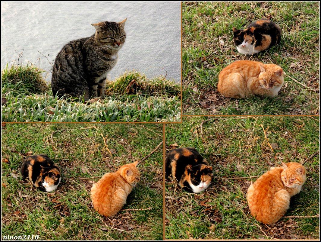 Анапские кошки - Нина Бутко