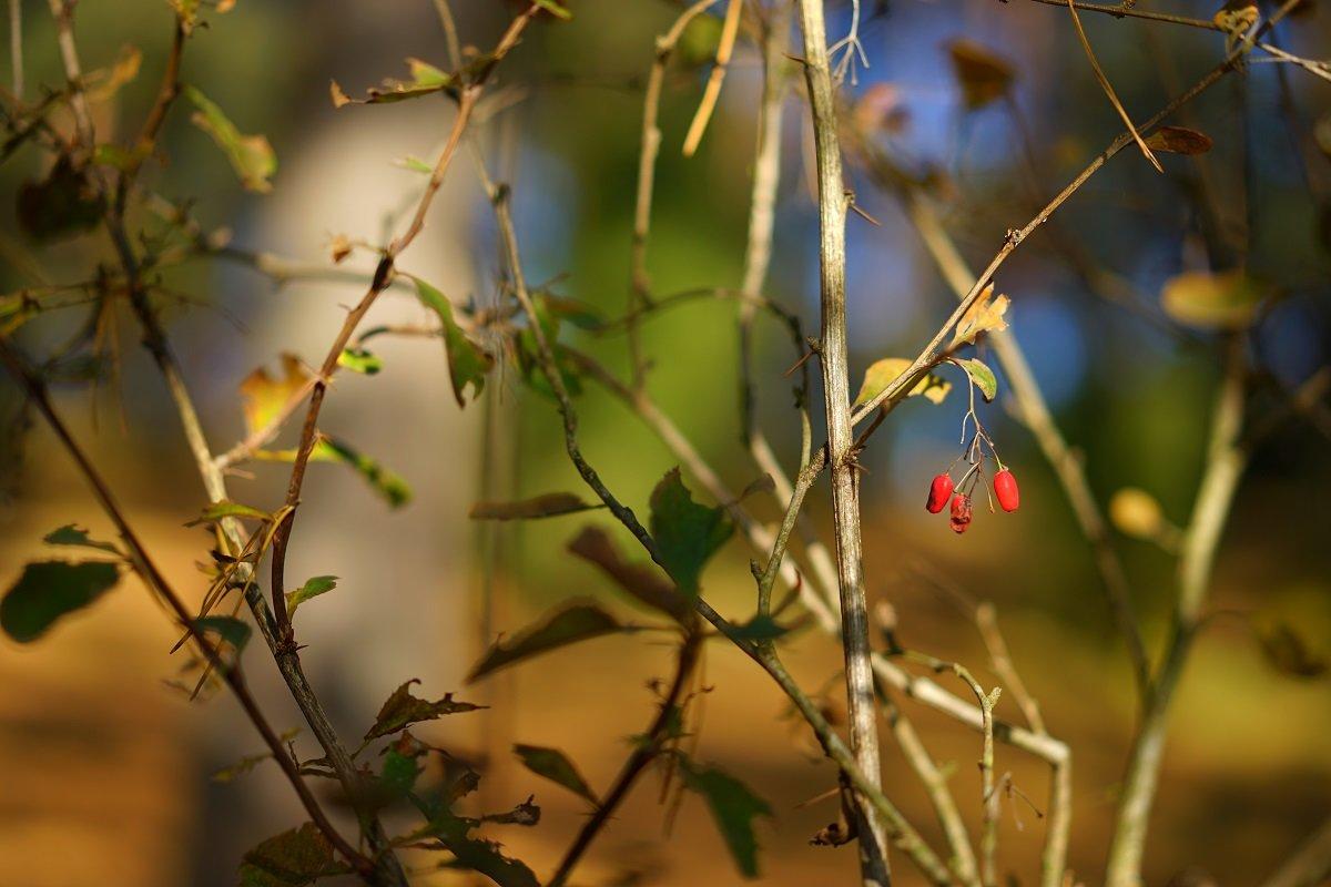 Осенние цветы - Sony 2 Sony 2