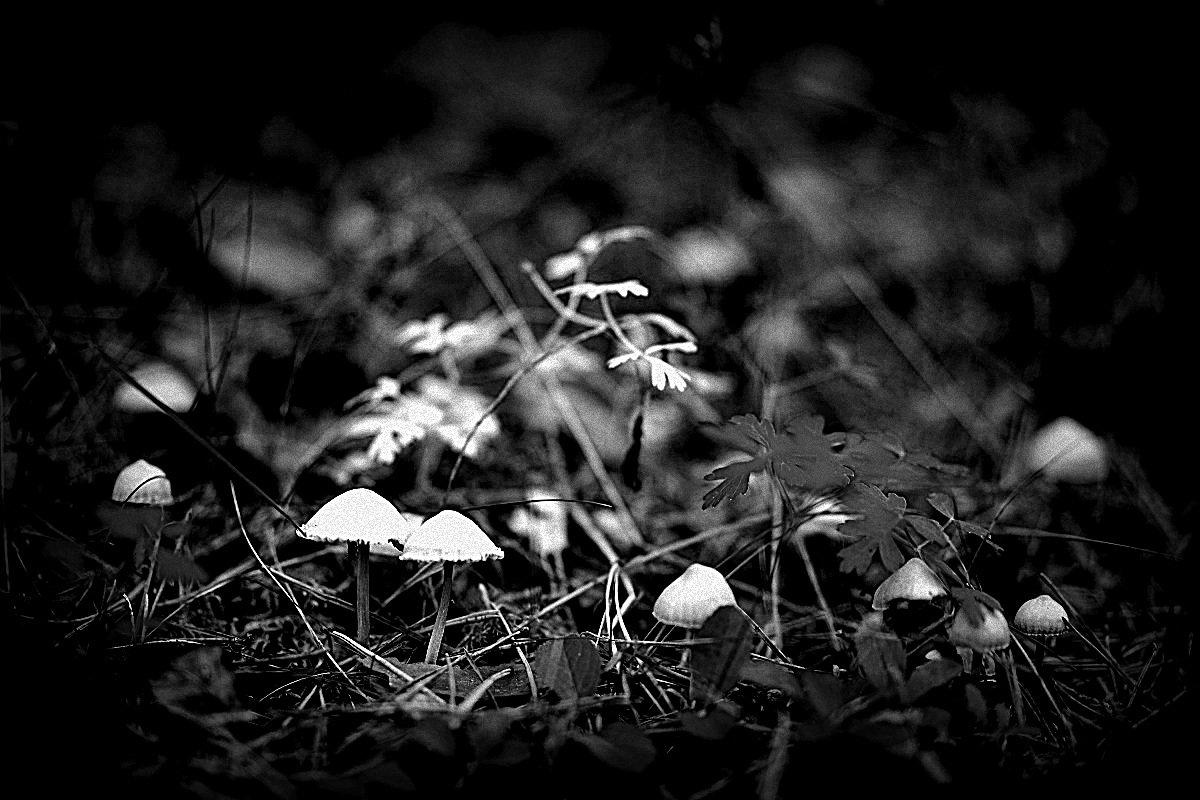 Лес в черно-белом - Sony 2 Sony 2