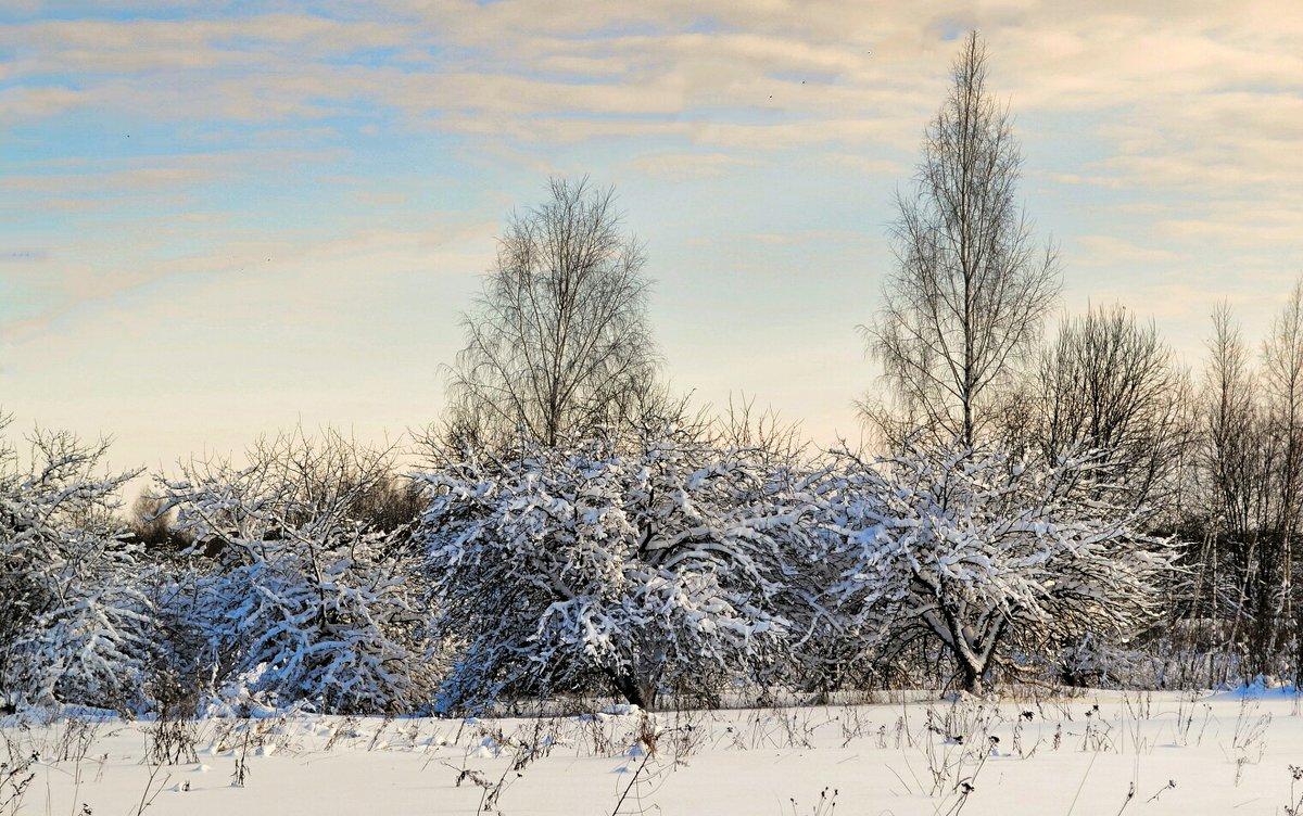 Яблоневый сад в январе - Милешкин Владимир Алексеевич