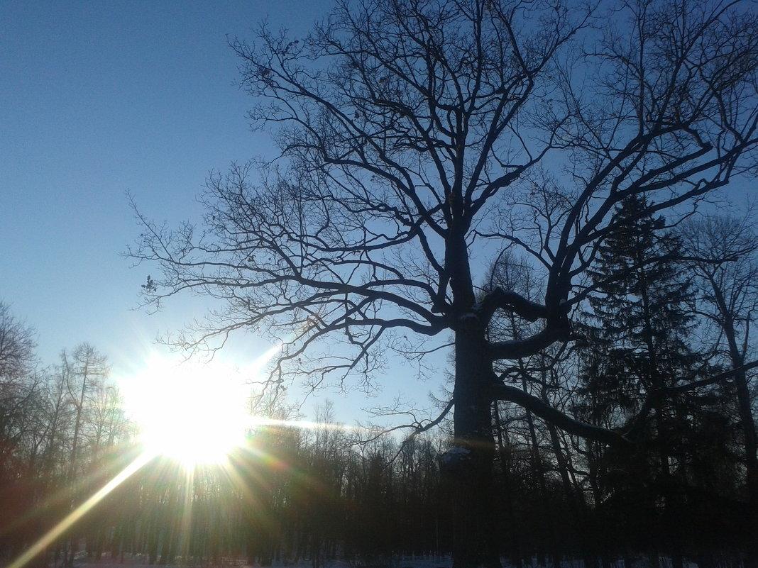 Зимнее солнце - Сапсан