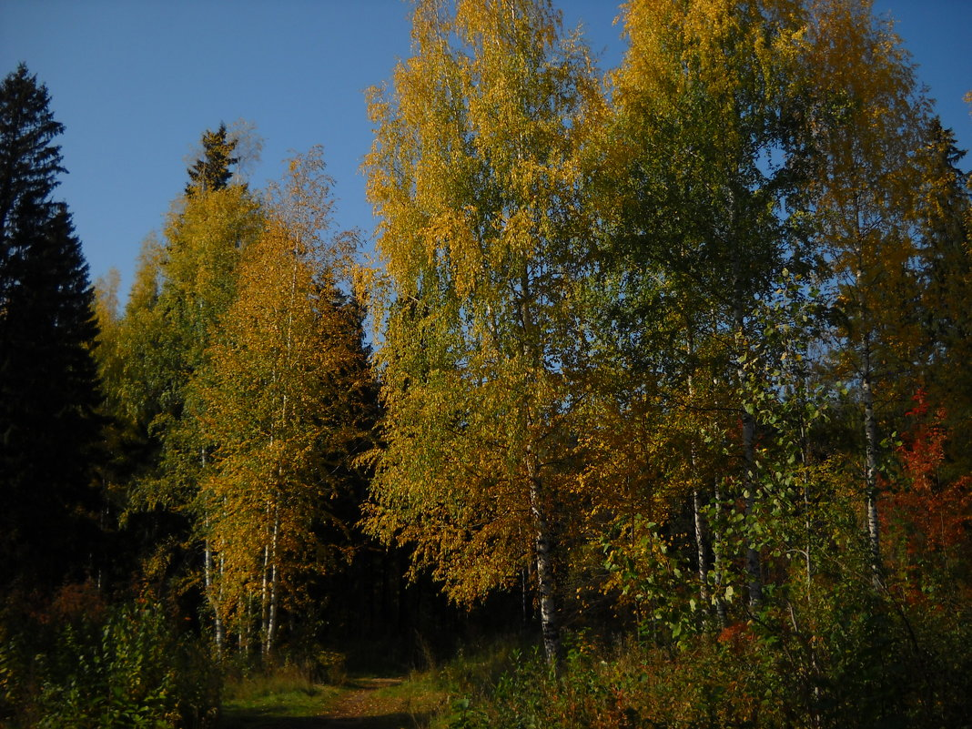 Осень - Александр Попков
