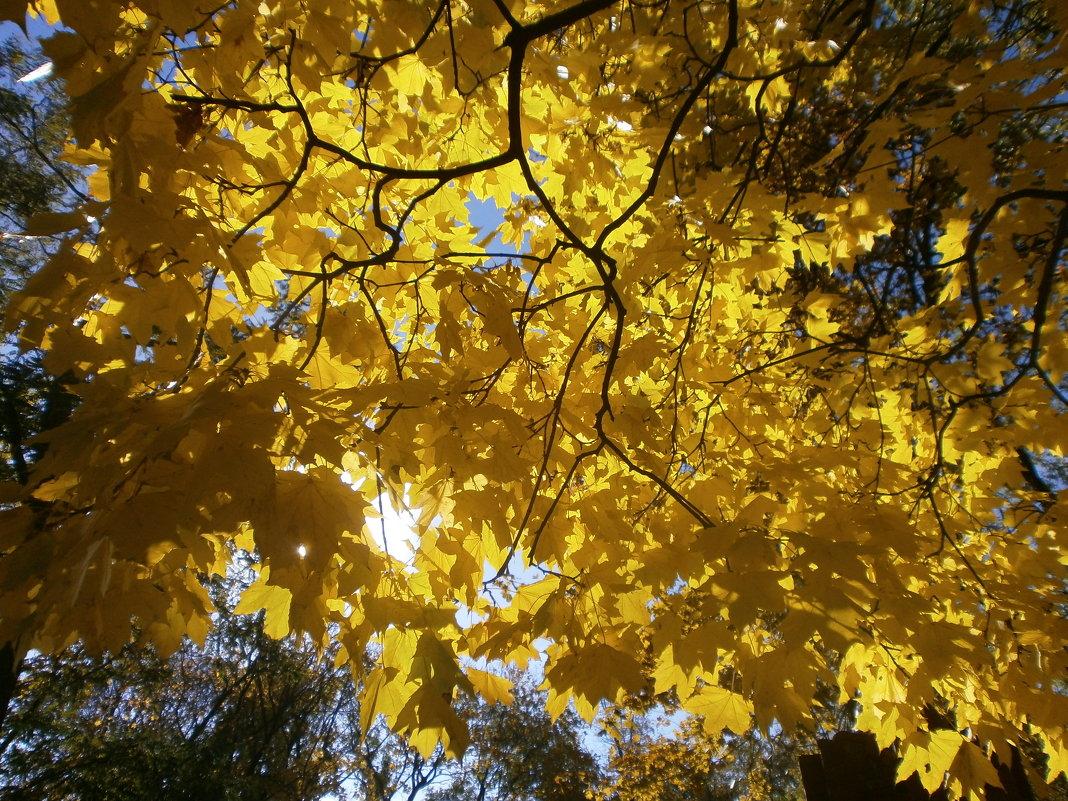 Золото листвы - mAri