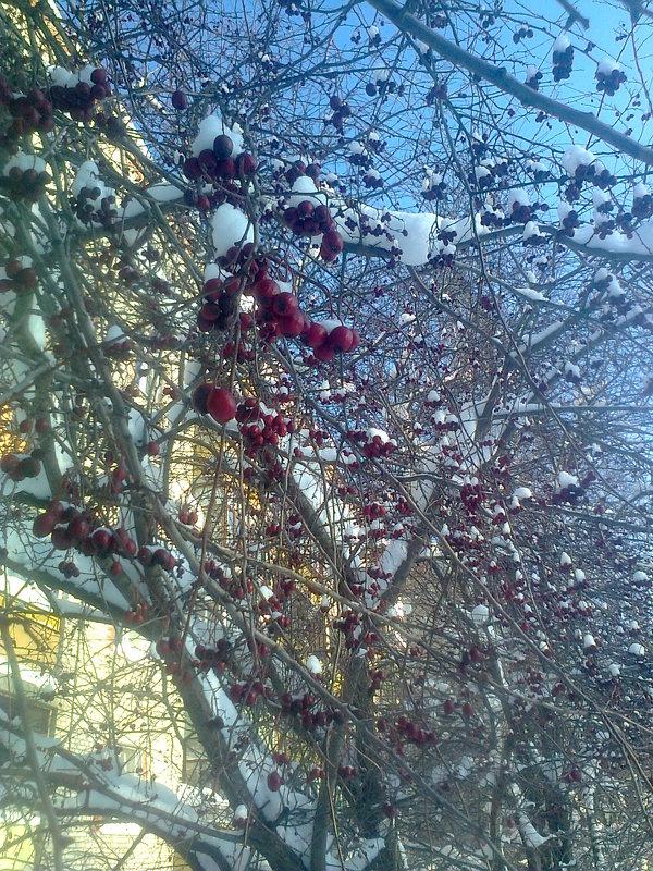 Зимняя рябина в городе растёт - Виктор Мухин