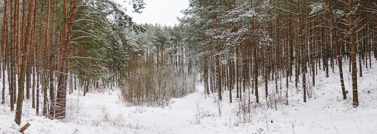Зимняя панорама - Анатолий Клепешнёв