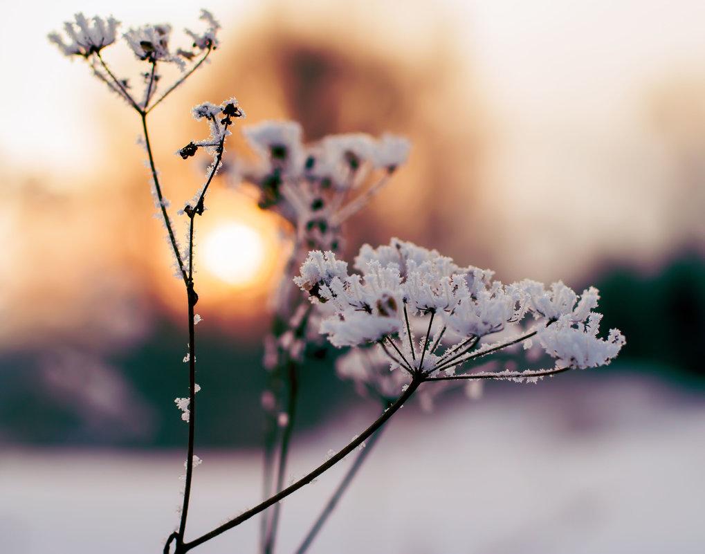 Солнышко в траве - Константин Батищев