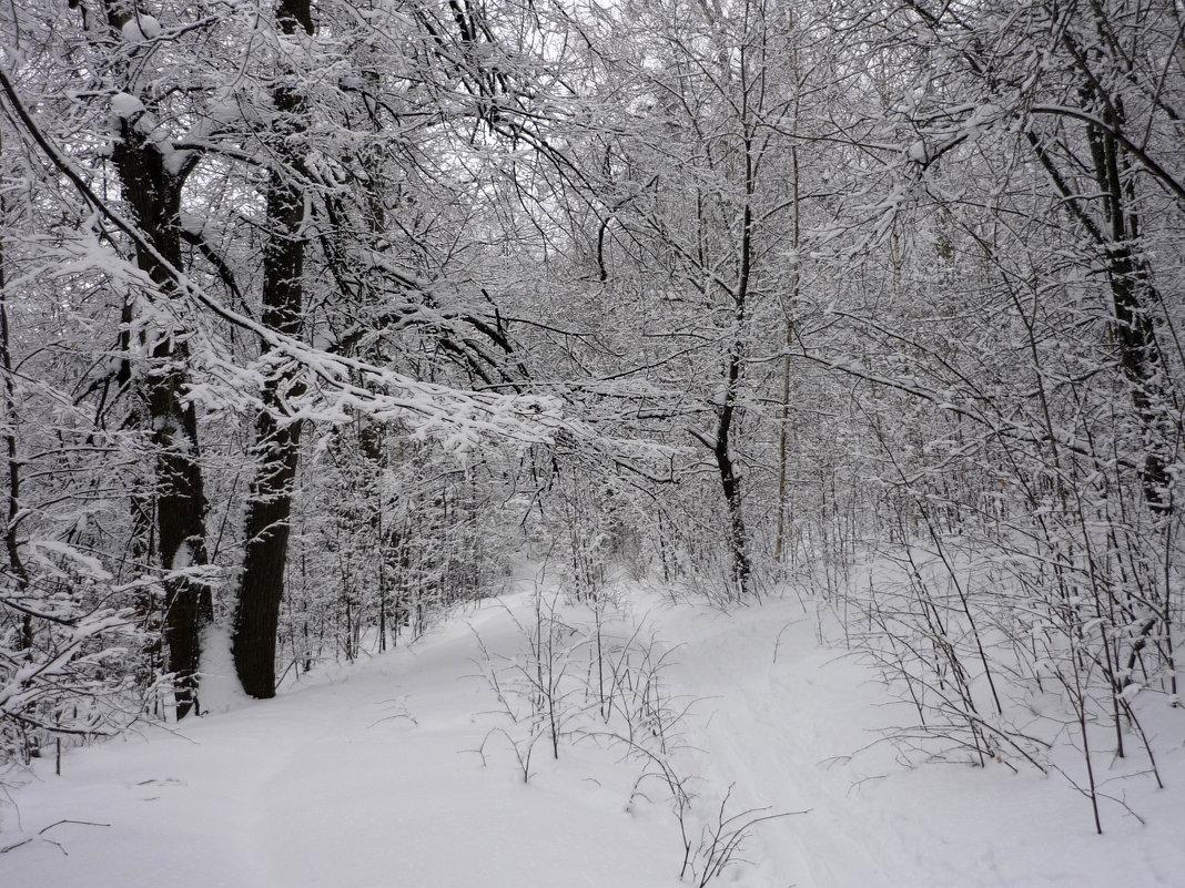 В лесу - Ольга