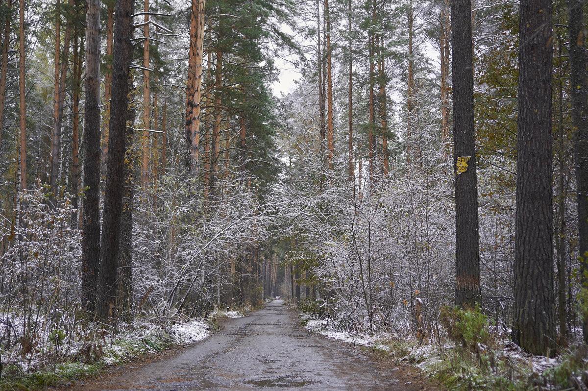 Зимний лес - Михаил Фролов