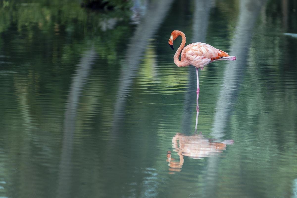 Розовый фламинго - дитя заката 2/3 - Борис Гольдберг
