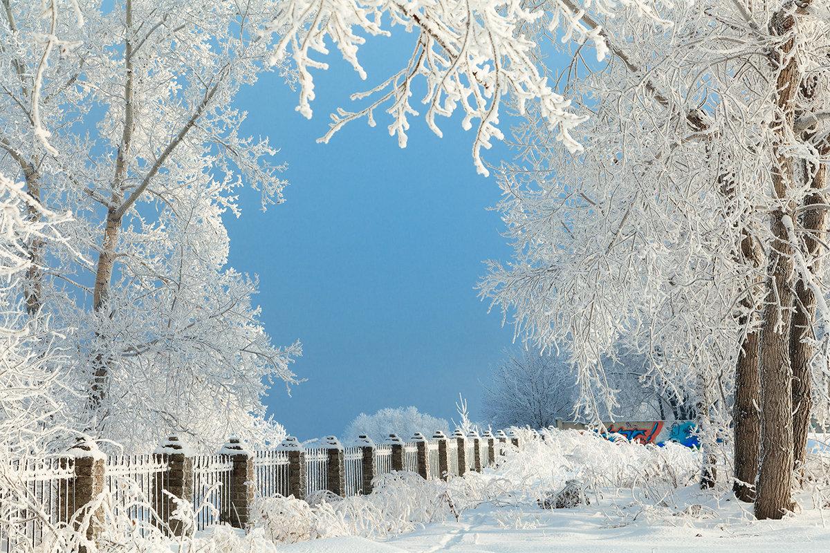 в январе - зоя полянская