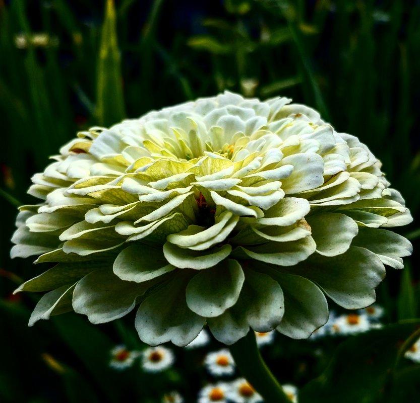 Цветок - Виктория Черненко