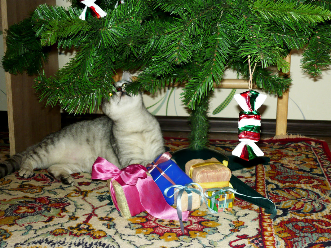 Может и к Старому Новому Году мне припрятали подарочек? - Надежда