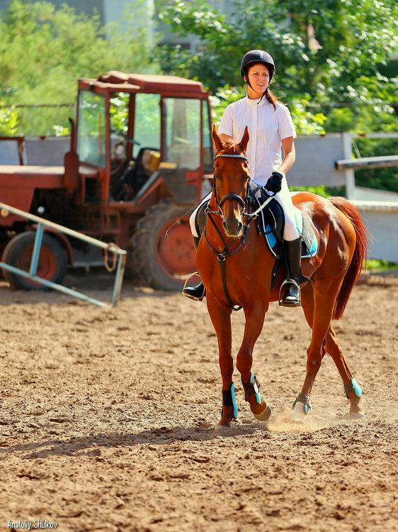 Конь живой и железный - Анатолий Шулков