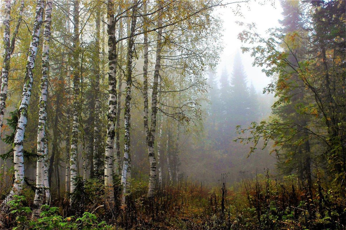 Осенний лес - Сергей Чиняев