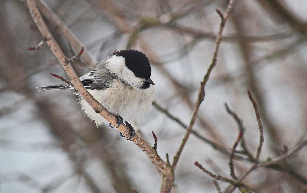 Из жизни птиц - Татьяна