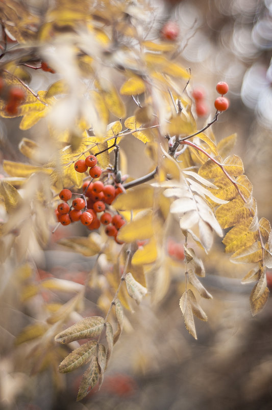 Red Gold - Сергей Nikon