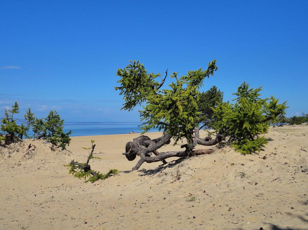Жизнь в песках - Евгений Карский