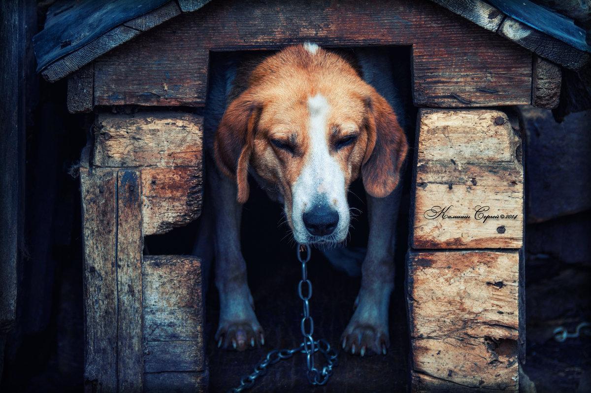 Старая собачка - Сергей