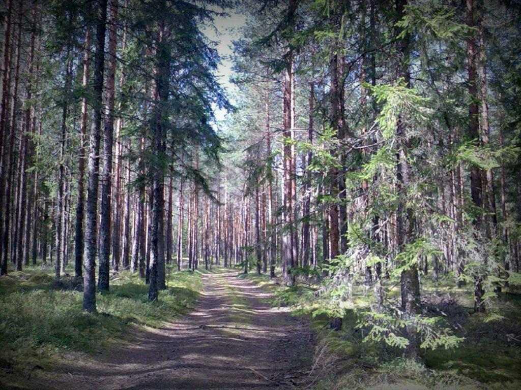 Лесные и ягодные прогулки - Натали Пам