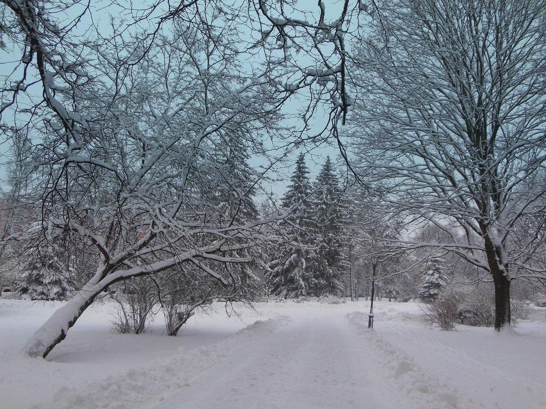 Зима в парке - Татьяна