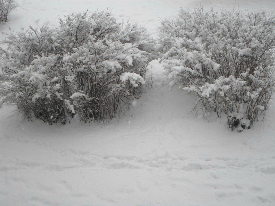 Ночью выпал снег... - BoxerMak Mak