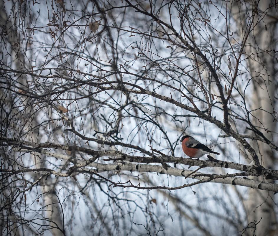 Зима за окном - Ольга Фролова