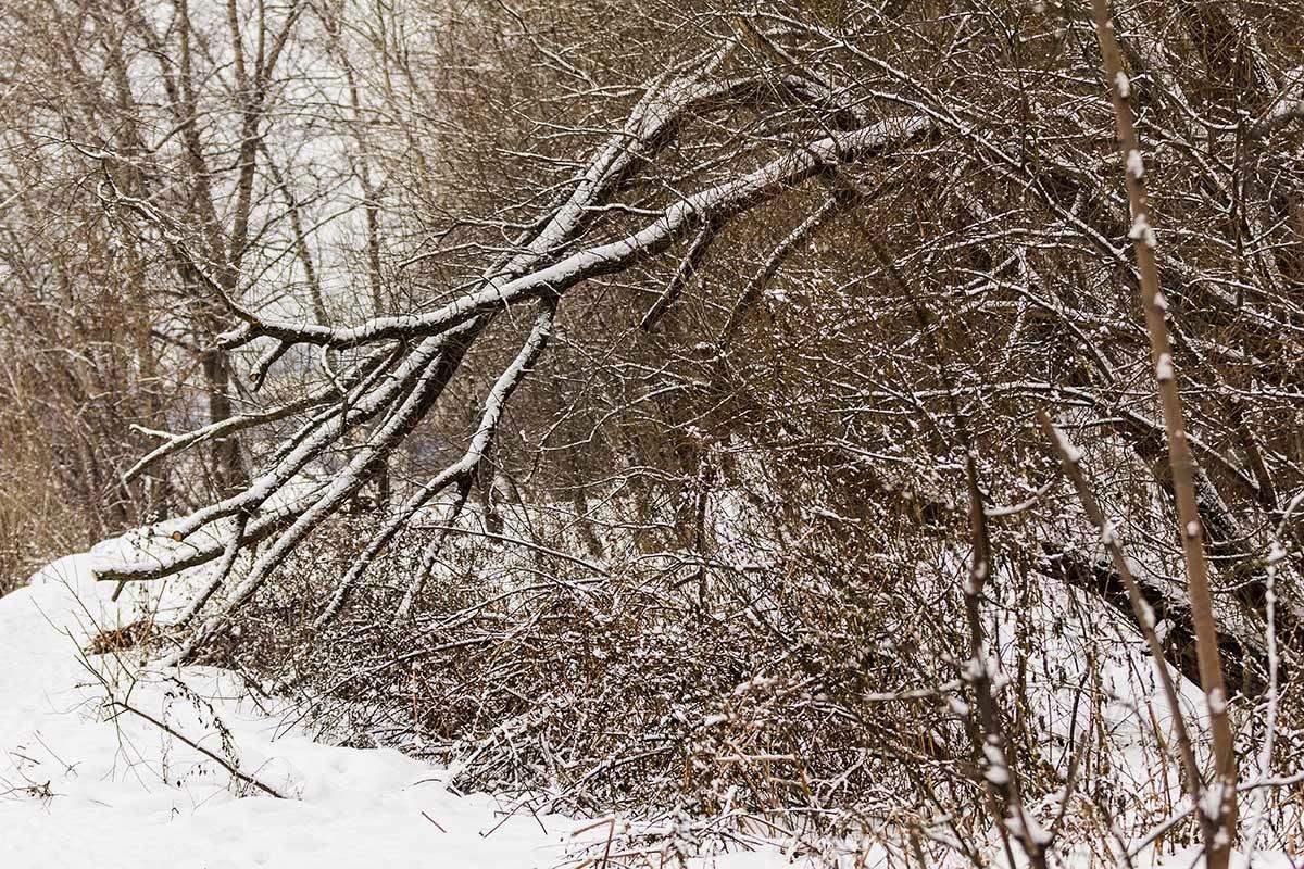 Зима в городе - Александр