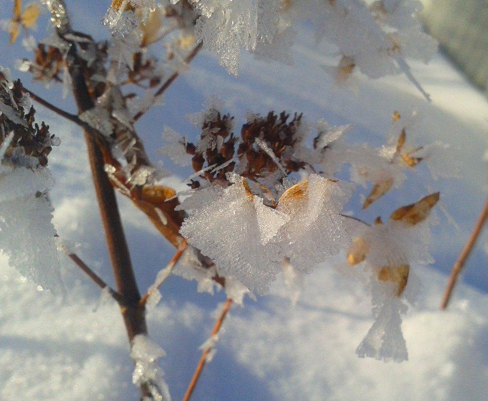 ледяные бабочки - Татьяна