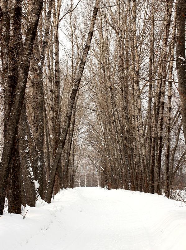 Деревья - Дмитрий Арсеньев