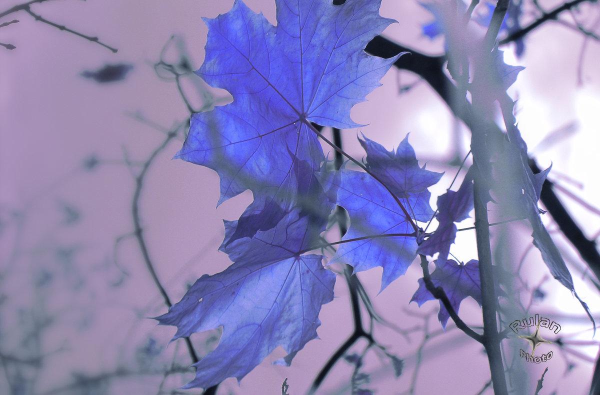 Кленовые листья - Руслан Тимошенко