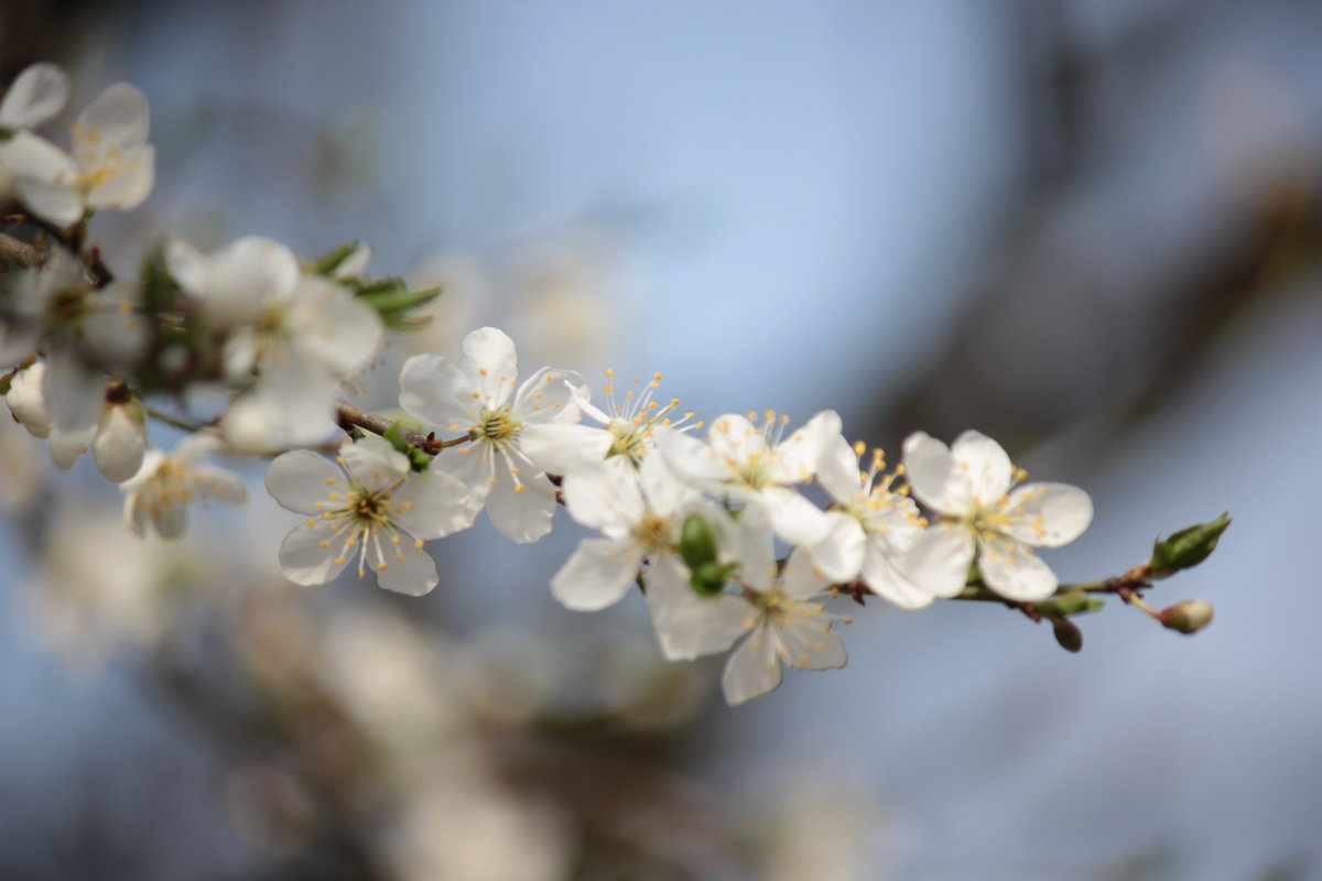 Весна пришла-7. - Руслан Грицунь