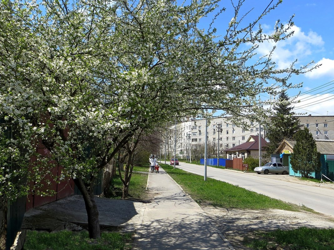 Весна на моей улице - Татьяна Смоляниченко