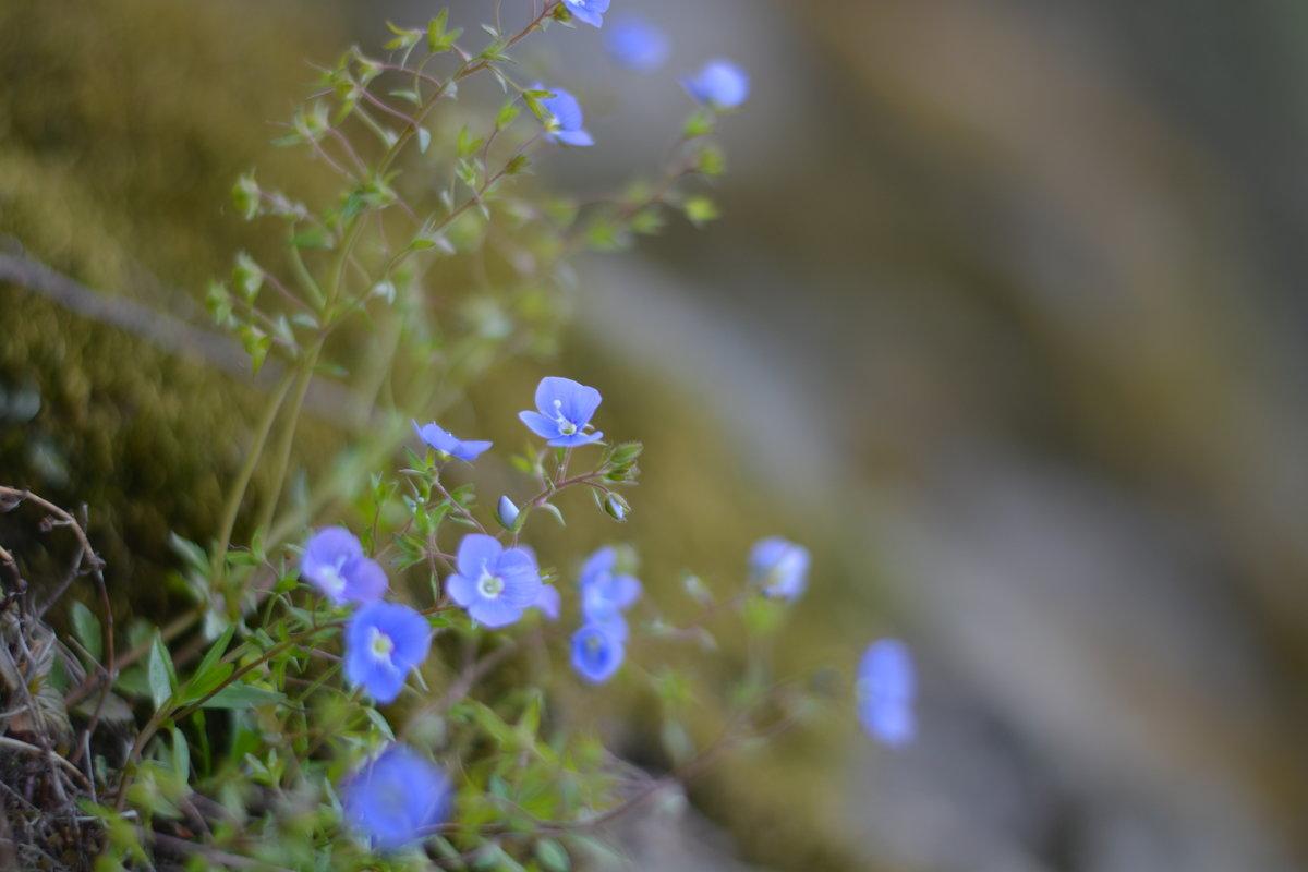 Полевые цветы - Андрей Абраменко