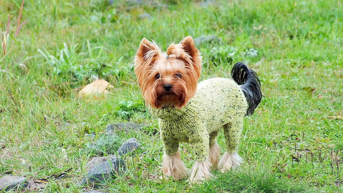 зелёная модница - Александр Прокудин