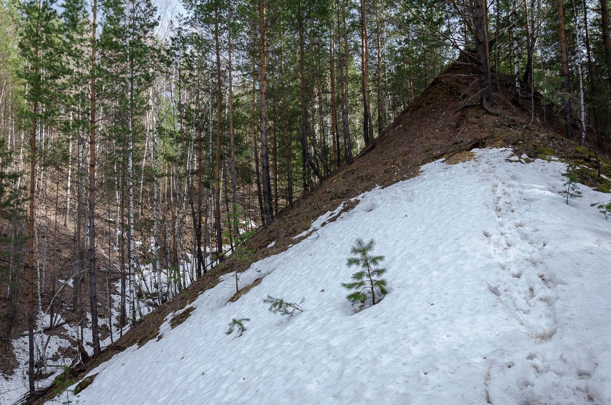 Лесной овраг - Вера