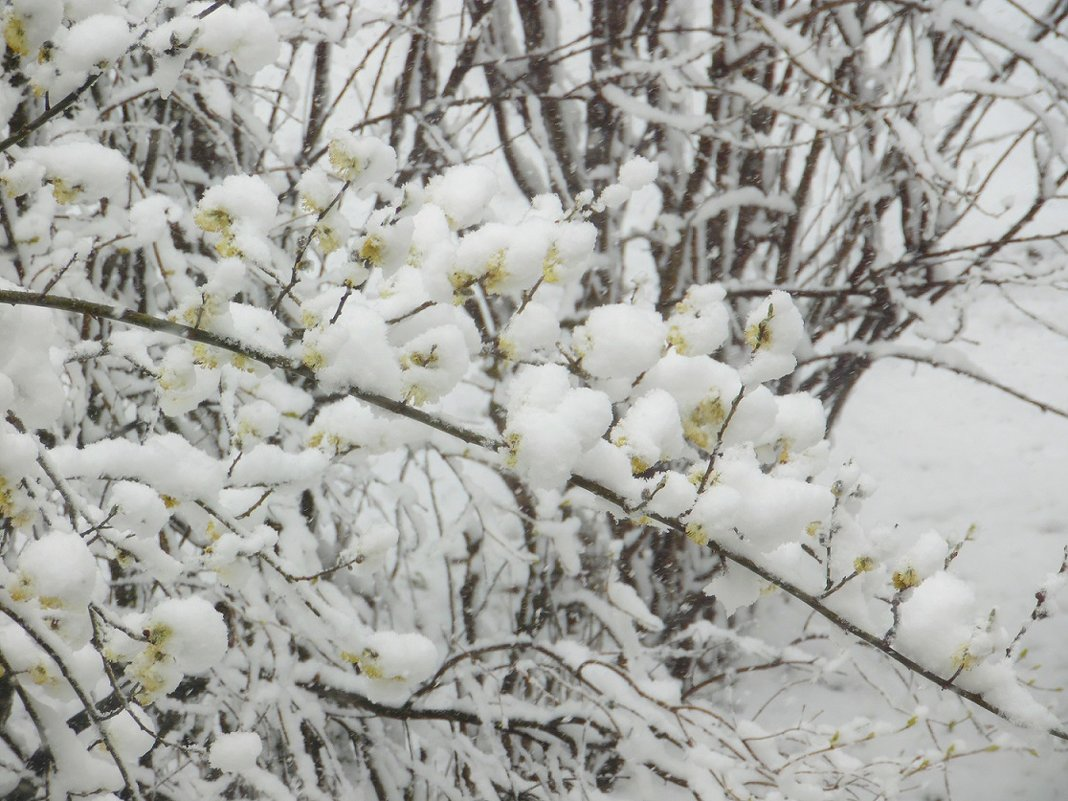 Снег в апреле... - Наталья Полочанка