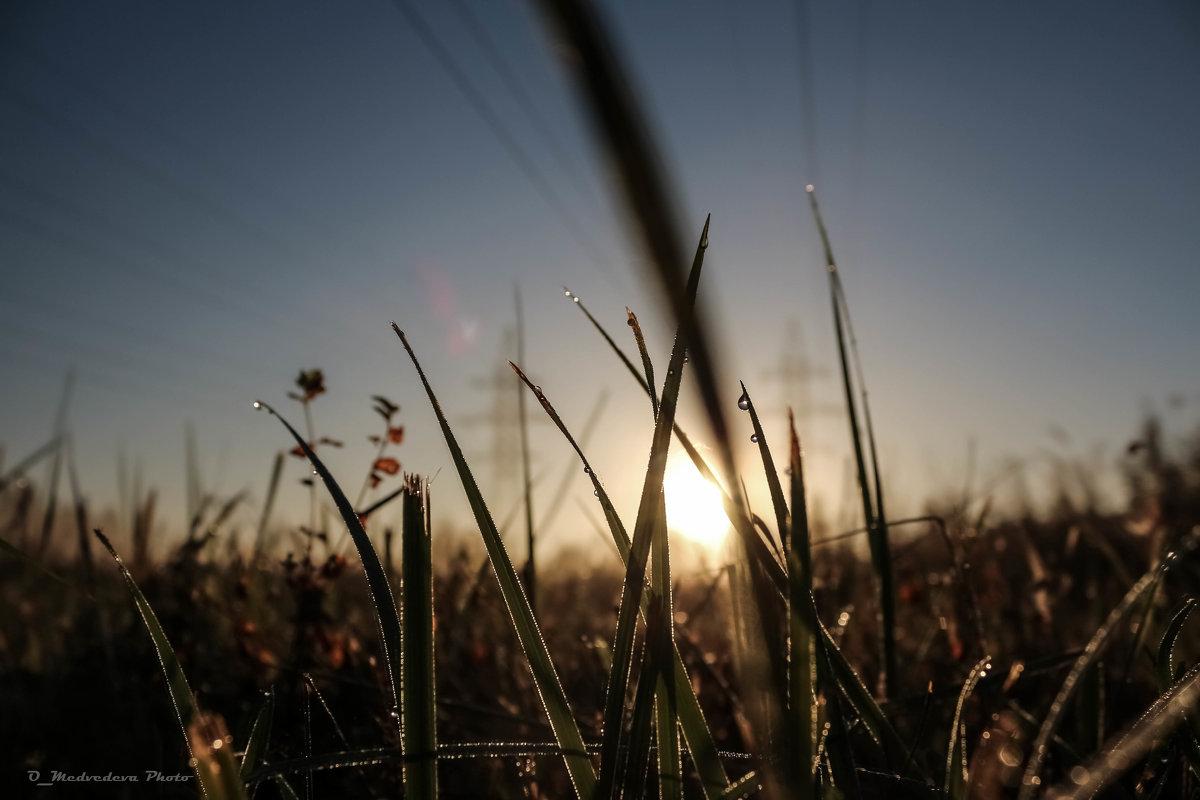 трава на рассвете - Ольга (Кошкотень) Медведева